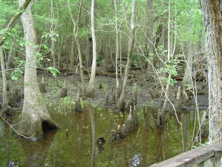 4-holes-swamp-007