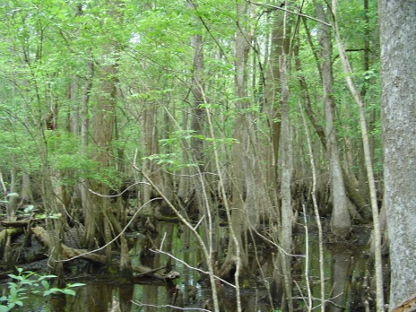 4-holes-swamp-009