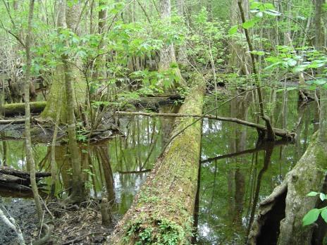 4-holes-swamp-010