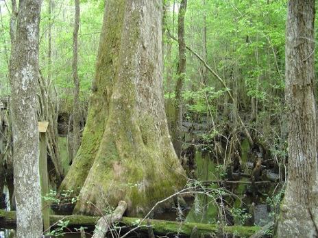 4-holes-swamp-014