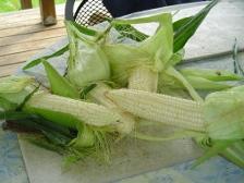 corn-0081
