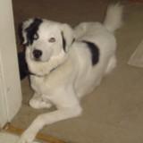 Bonnie's dog, Lily.