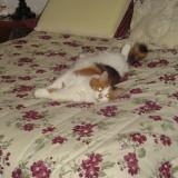 Linda's cat Chloe.