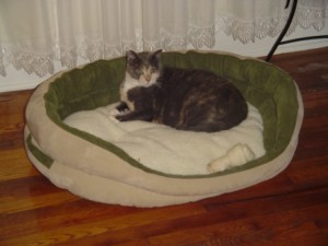 We bought a new bed for Sam. (See photo above). Grace likes it, too.