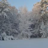 Backyard snow trees
