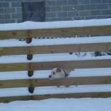 Sam enjoying the snow