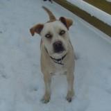 Sam enjoys the snow 4