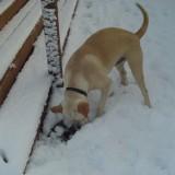 Sam enjoys the snow 5
