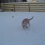 Sam enjoys the snow 7