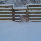 Sam's 1st snow 2