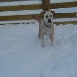 Sam's 1st snow 3