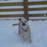 Sam's 1st snow 4